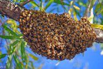 bee swarm 2