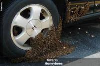 bee swarm 5
