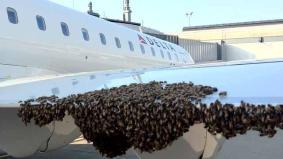 delta-swarm.jpg